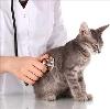 Ветеринарные клиники в Золотково